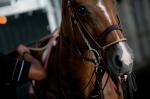 Equine Eyes