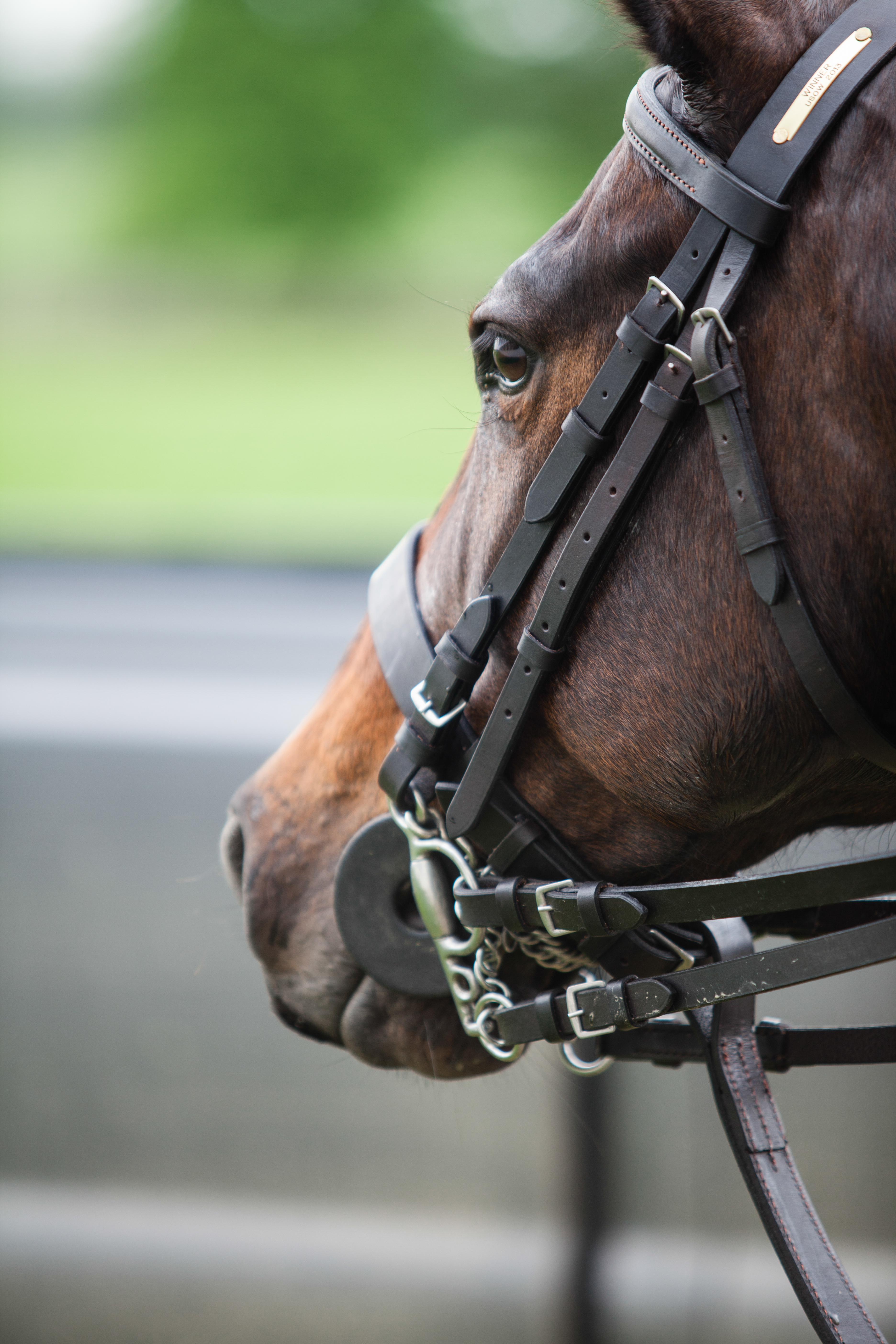 Polo Bits and How to Get the Most From Them | Complete Guide to Polo
