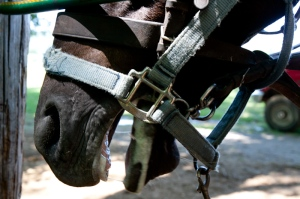 Improperly Fitted Bit Causing Horse Discomfort